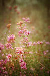 Floral mood by kil1k