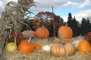 Autumn Treasures by Gryffgirl