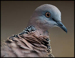 Dove by 88-Law