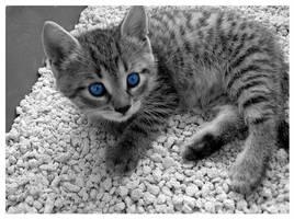 Minki Blue Eyes by little-billie
