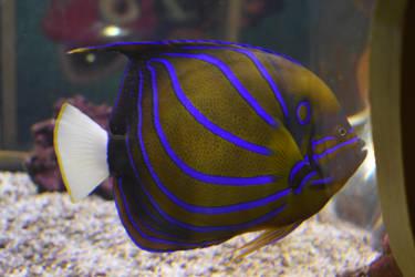 Fish 5 Stock by AmandaKulpStock