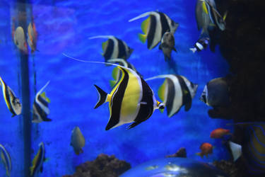 Fish 6 Stock by AmandaKulpStock