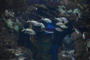 School of Fish Stock by AmandaKulpStock