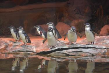 Penguins 2 Stock by AmandaKulpStock