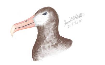 Digital Drawing Practice - Albatross Head by HeavyMetal747