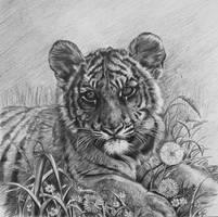 Tiger cub by Olya-N-i-k