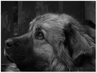 Dog2 by Hallan1989