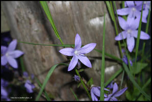 Blue Flower by TakeMeToAnotherPlace