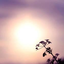 Oriental Sunlight by TakeMeToAnotherPlace
