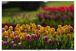 Day 235 - Flowerbeds by TakeMeToAnotherPlace