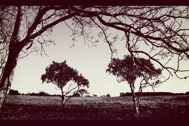 The Orangetree brothers by yamiryuk