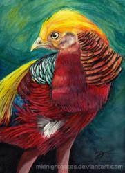 Golden Pheasant by midnightgates