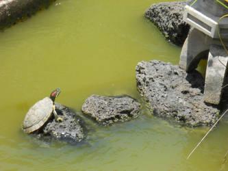 Hello Mr. Turtle. by ZookieCookie