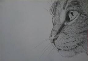 Cat by Rolinkaa