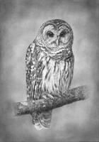 Owl by evgeniyfill82