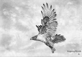 Hawk by evgeniyfill82
