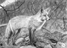Fox by evgeniyfill82