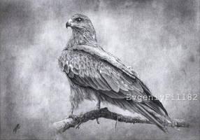Black Kite by evgeniyfill82