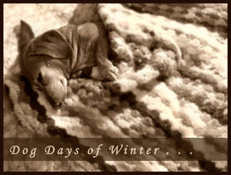 Dog Days of Winter . . . by CalliopesRoom