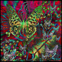 Ab10 Butterflies Garden by Xantipa2