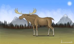 Moose by Louisetheanimator