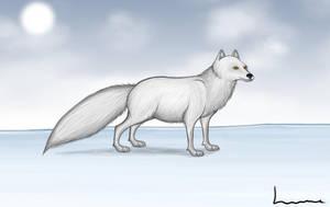 Arctic fox by Louisetheanimator