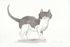 Black and White Cat by Louisetheanimator