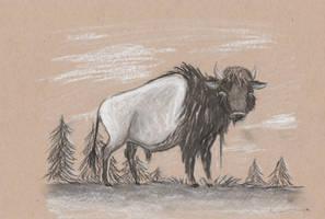 Buffalo by Louisetheanimator