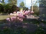 Flamingoes by Louisetheanimator