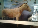 Quagga Taxidermy 2 by Louisetheanimator