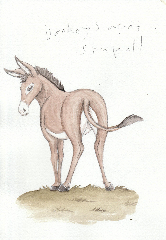 Donkeys Aren't Stupid by Louisetheanimator