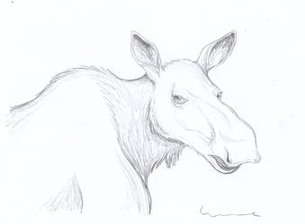 Female Moose Head by Louisetheanimator