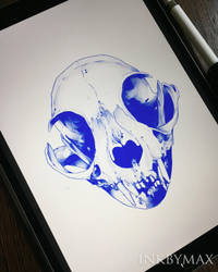 Realistic cat skull by Inkbymax