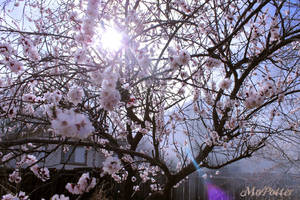 Springtime Sunlight by MoPotter