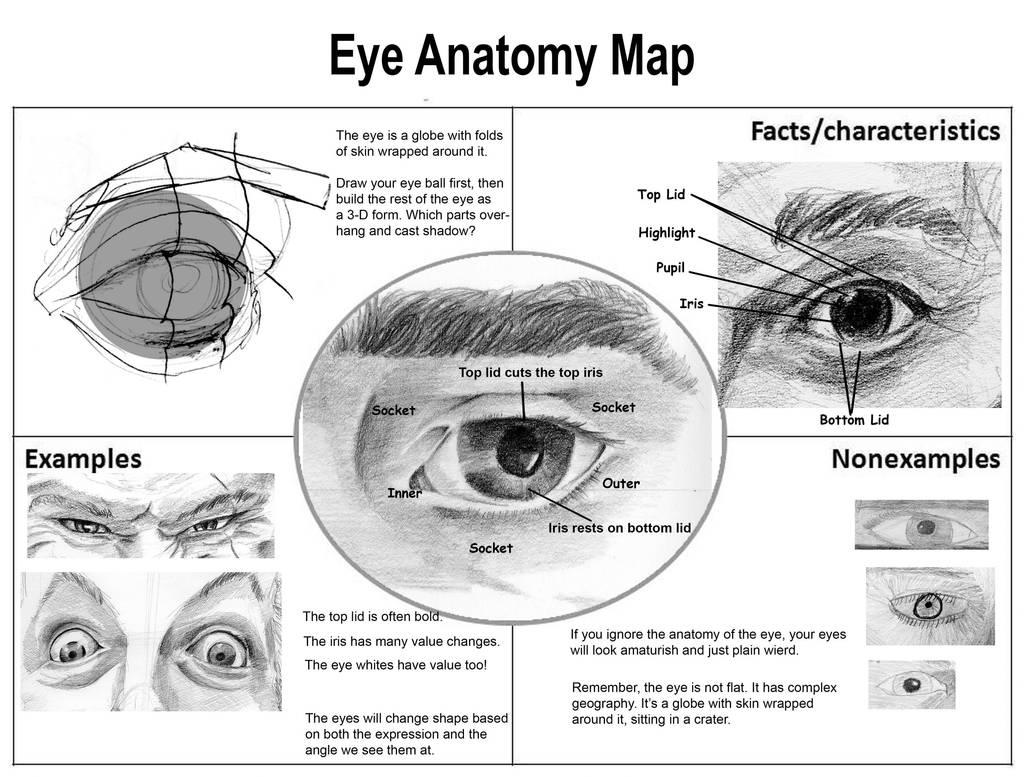 Eye Anatomy Map By Aaronverzatt On Deviantart