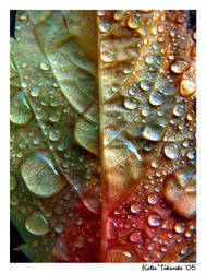 After The Rain III by Fibreoptic-Snowman