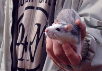 Rat by Krendel