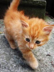 Strut, kitty, strut by wallflower-perks