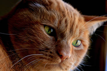 Spike's Closeup by dpierce1313