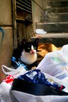 vagabond garbageman by sairalindesaralonde