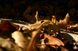 autumn yearning 1 by sairalindesaralonde
