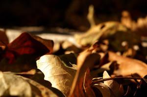 autumn yearning 2 by sairalindesaralonde