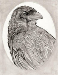 Raven by kaliburstudio