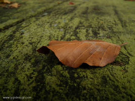 Feuille sur table en bois by jypdesign