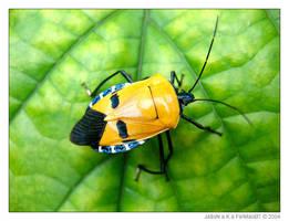 Yellow Beetle by feimao07