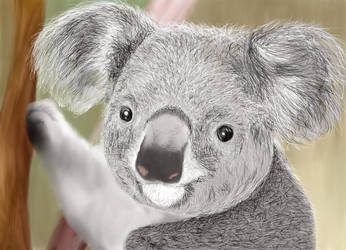 Koala by pseudologoi999