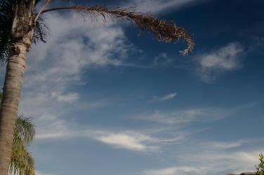 Palm Sky by mc-cool