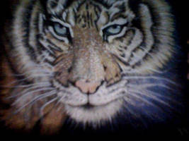 stalking tiger . A3 pencil and acrylic ,glow i by darrenTyrie