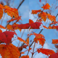 Orange meets blue by Vegasbride