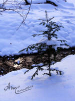 Little Lake In Snow by Artist2Be84